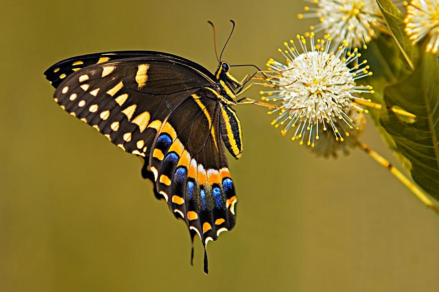 Butterfly-01.jpg