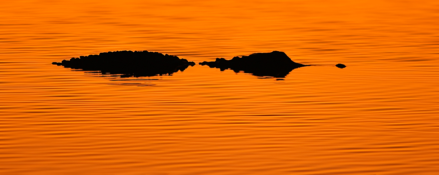 Sunset-Aligator.jpg