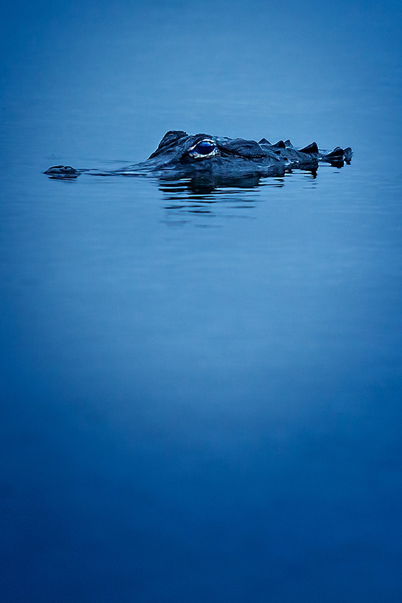 Twilight-Gator-01.jpg