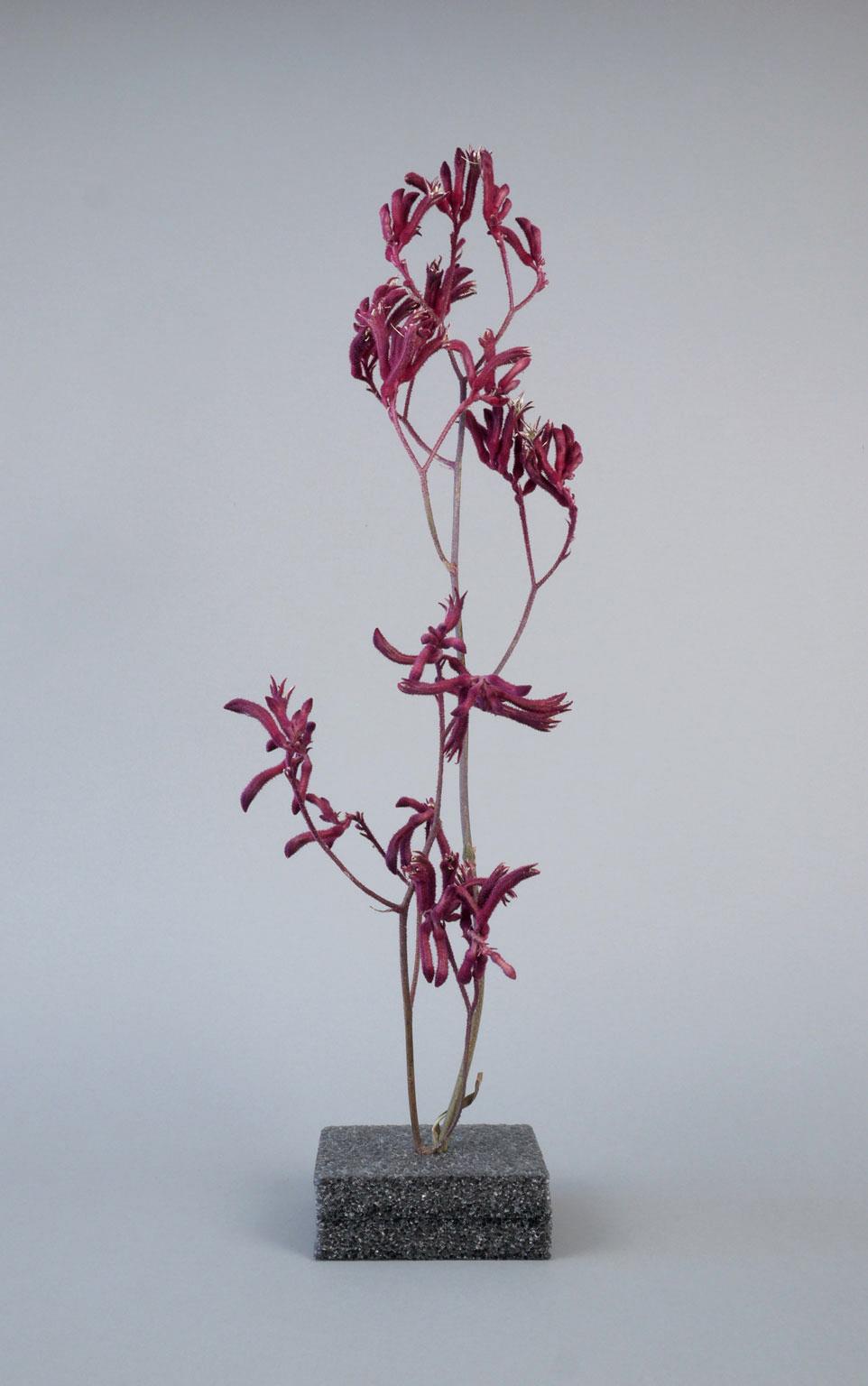 Veit-Ikebana-web.jpg