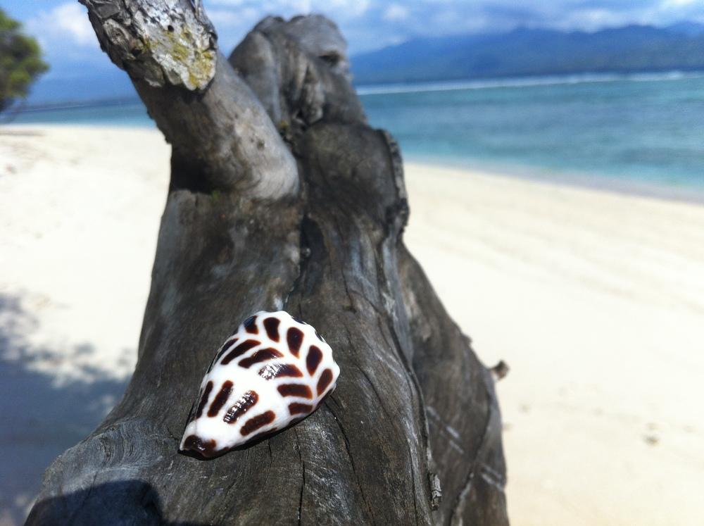 gili-schelp