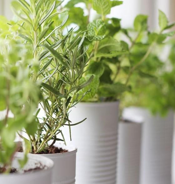 4. Verdure - Le jardin s'invite à l'intérieur