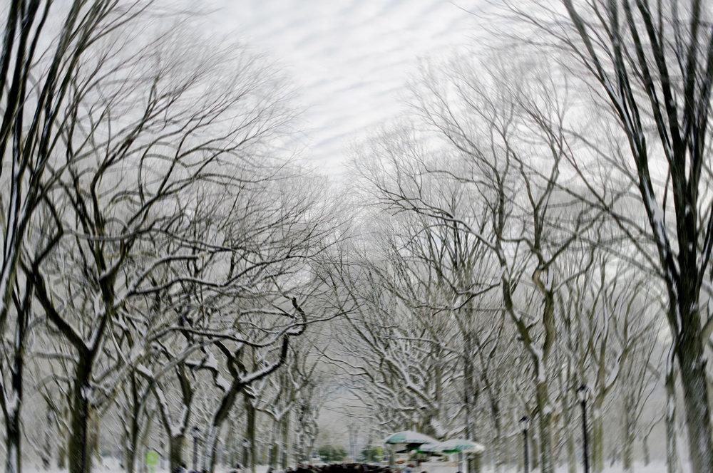 _W1A0250_rthompson_blurred.jpg