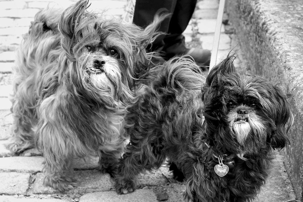 7W1A6636_dogs_b&w_ritathompson.jpg