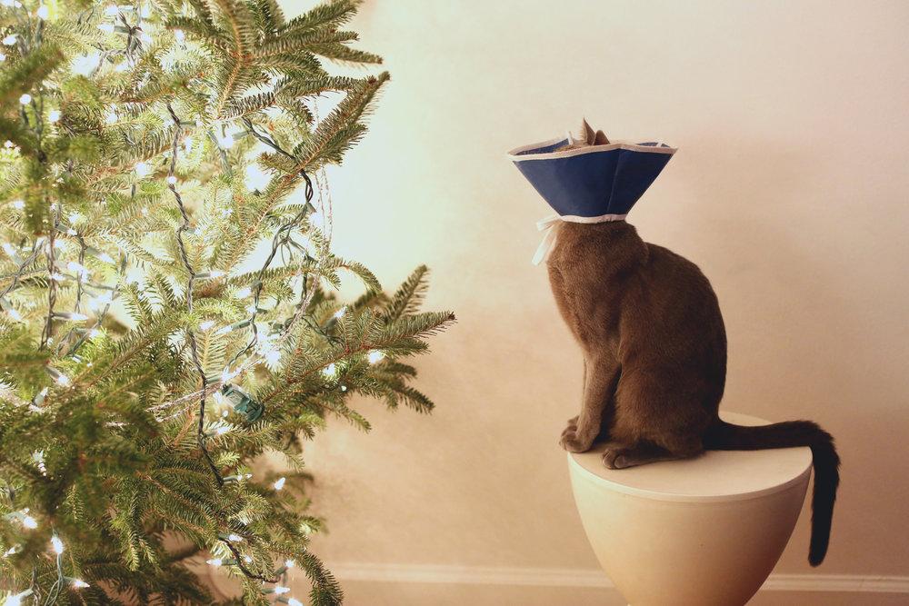 cat cone_pdn_ritathompson.jpg