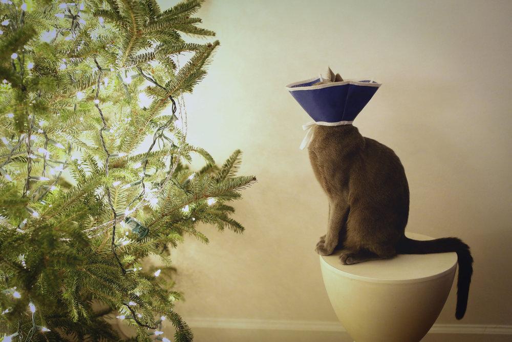 cat cone_rev_ritathompson.jpg