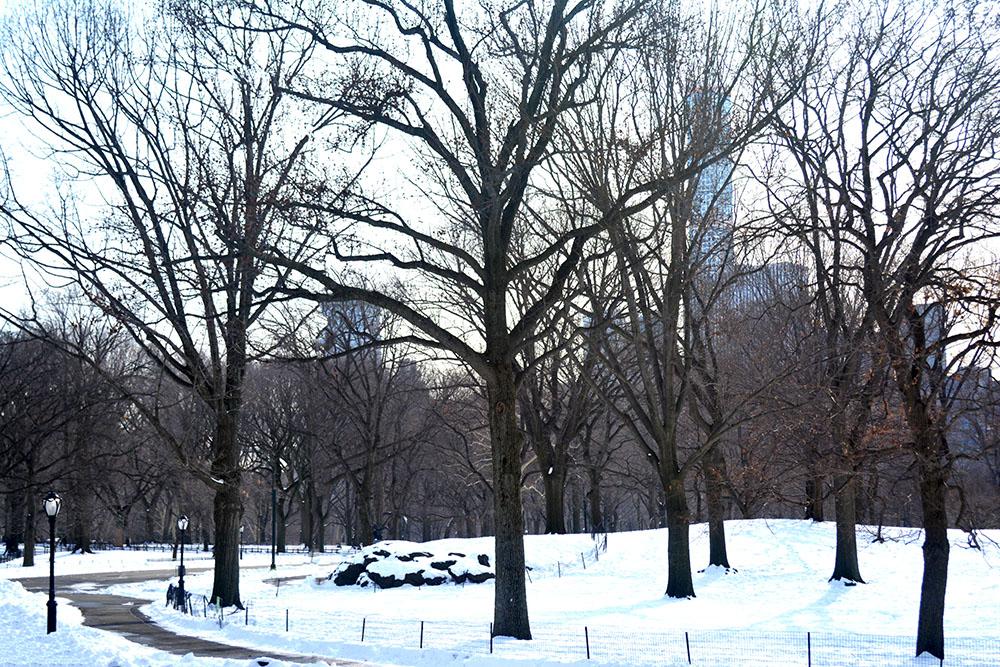 centralpark4 copy.jpg