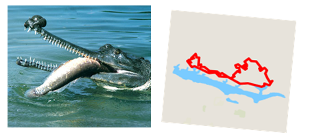 Left:  Indian Gharial/4SOH course   Right:  4SOH course/ Indian Gharial