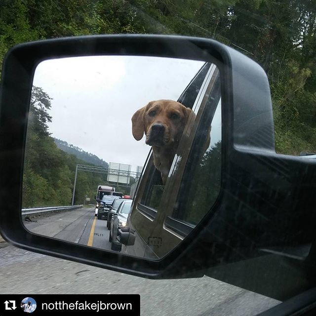 It's a #dogs life in #traffic near #Chattanooga courtesy of #Repost @notthefakejbrown and Pebbles. ・・・ What's up Pebbles!!! Things I do while sitting in #traffic outside #chattanooga . My expressive puppy!  #710toSlickville #jeep #dog #puppy #puppylove #bassethound #dogsofinstagram