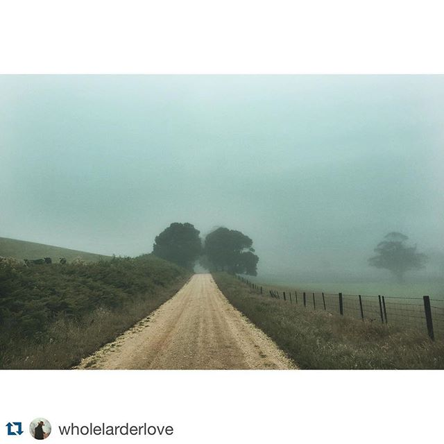Misty romantic Australian country road today courtesy of #Repost @wholelarderlove ・・・ Hectic commute to work this morning.