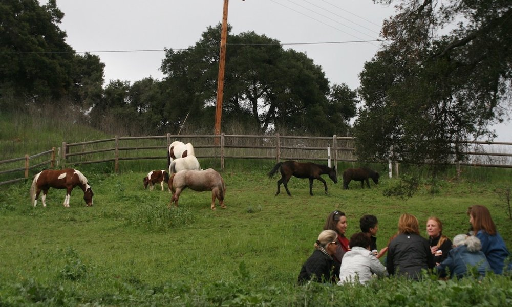 Modalities Used - · Natural horsemanship· Yoga and other movement activities· Reflections and energy practices· Mindfulness· Nature walks and hikes· Facilitated group discussion