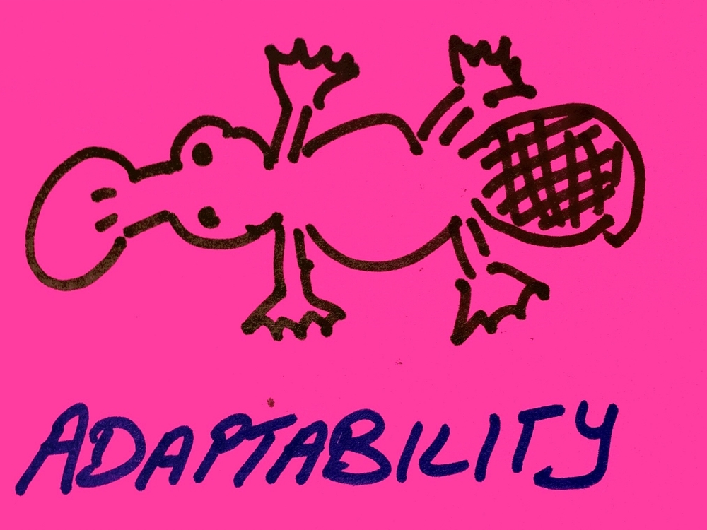 Adaptability Strengthsfinder Singapore Platypus Animal