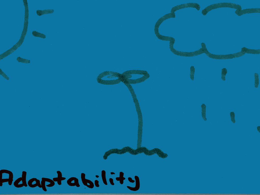 Adaptability Strengthsfinder Thriving in Rain or Sunshine