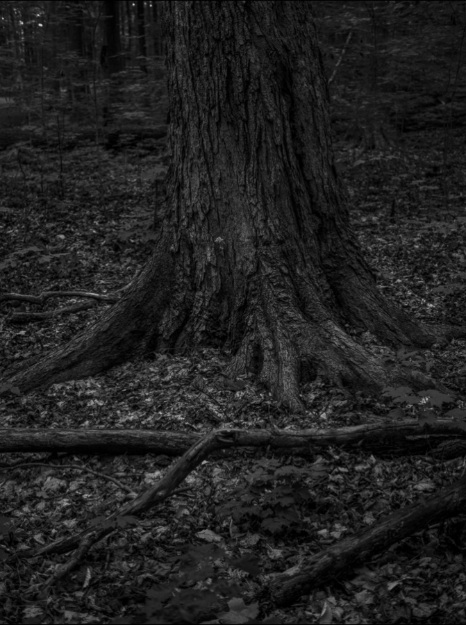 Phylactere-photography-BW2.png