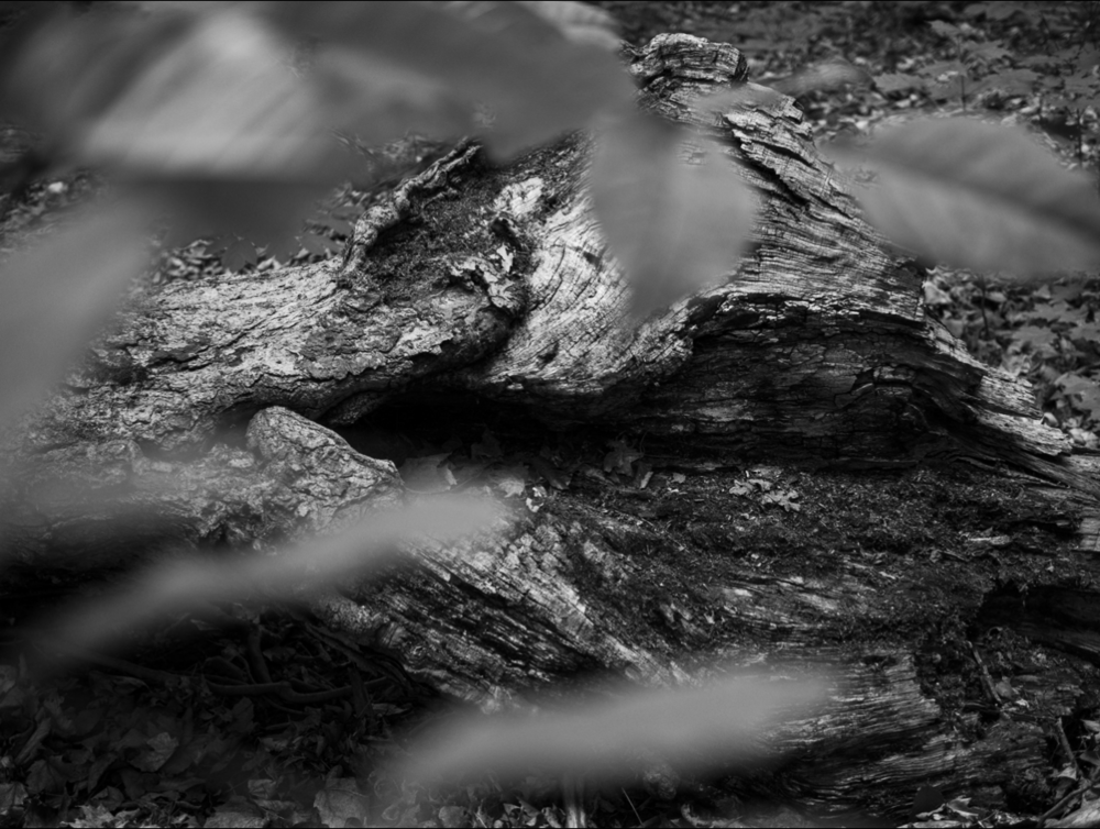 Phylactere-photography-BW9.png