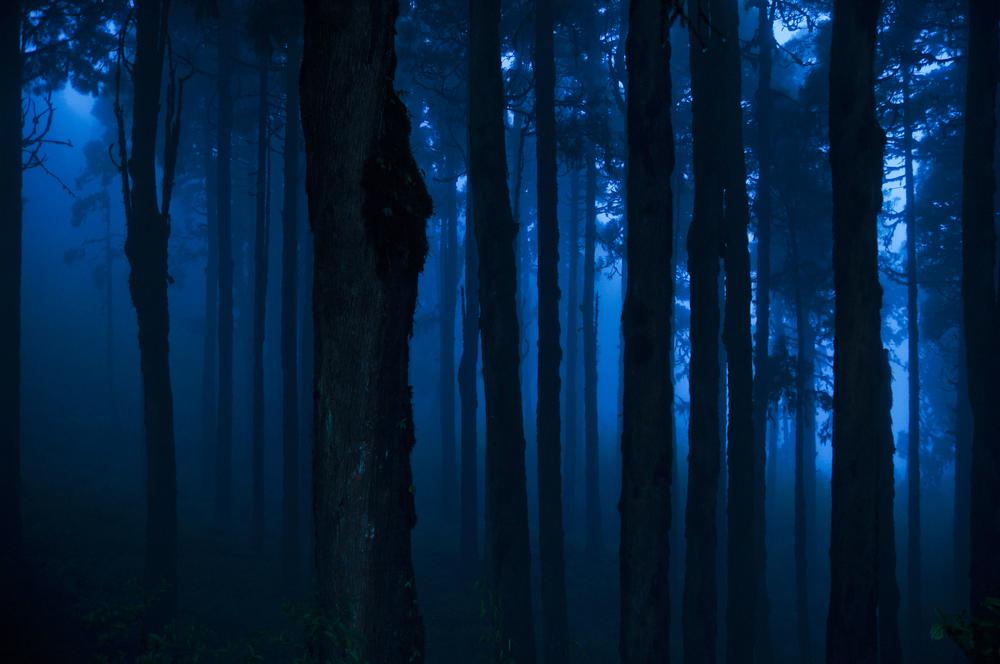 Darjeeling Mist Landscape.jpg