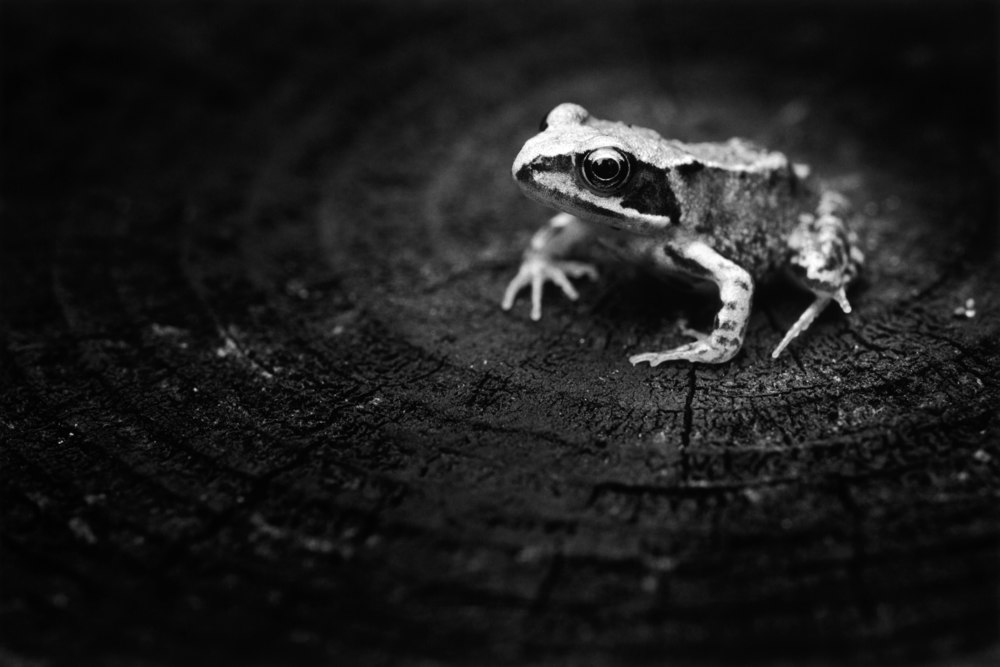 Sloss Froglet.jpg
