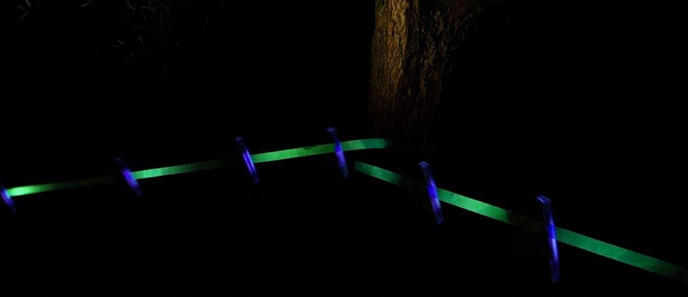 legare-gli-alberi-header-1-light.jpg