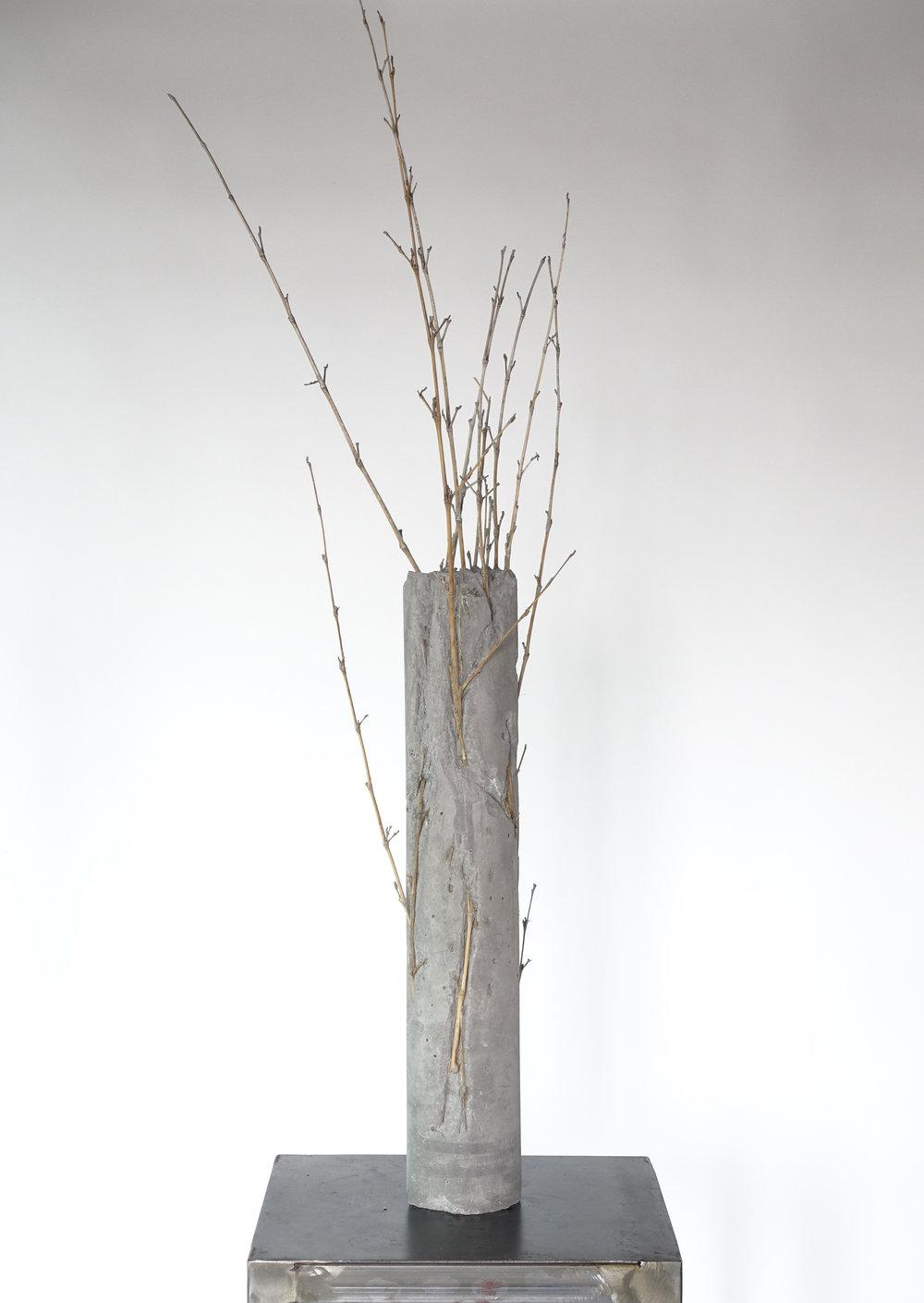 Still Life #6 Bamboo-Michele Tiberio.JPG