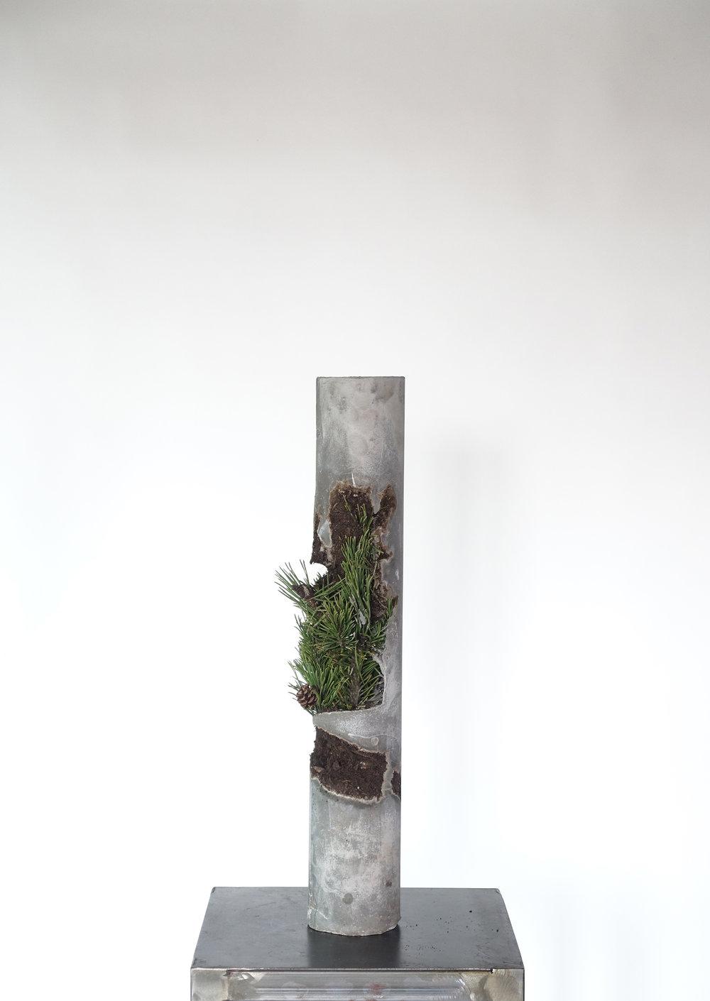Still Life #7 Pine Tree-Michele Tiberio.JPG