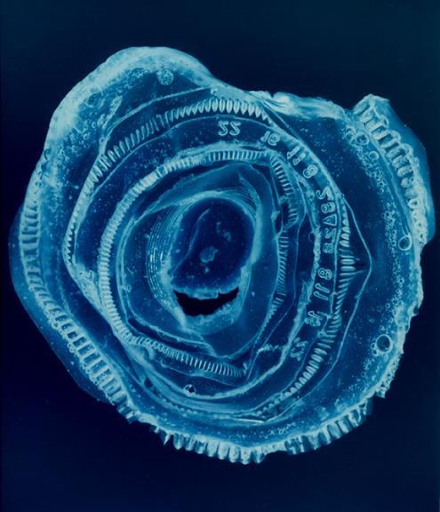 Blueprint #2, Penelope Davis, 2008, type c print, 115x110cm