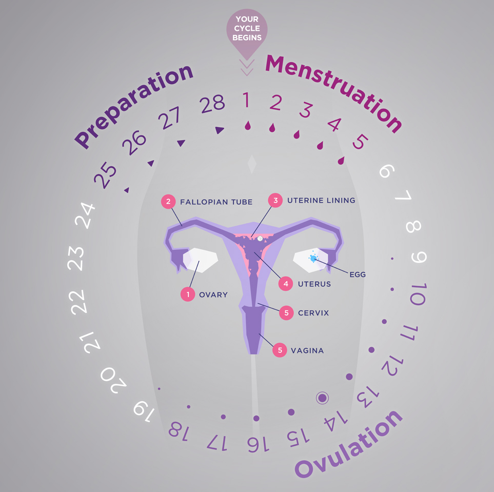 Be Girl SmartCycle - Preparation, Menstruation, and Ovulation .jpg