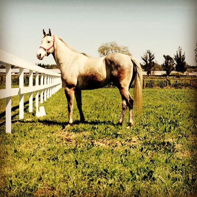 Tinsel in pasture