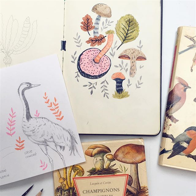 These little books of nature inspire me so much, especially the #fernandnathan edition I got for 50 cents at a flea market. Also love morning sketches, except that they make procrastination so easy 😊 Have a lovely day 🌿  #sketchbooktime #sketchbookpage #procrastinate #naturesketch #makearteveryday #mushroomlove #gruecendrée #wildlifedrawing #happymama