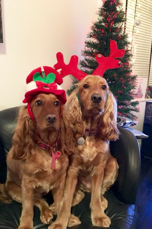 Christmas dogs.jpg