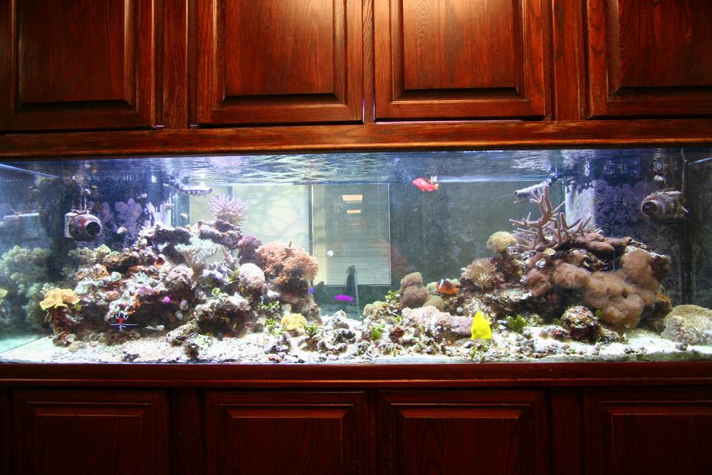 10 Reef Tank.JPG