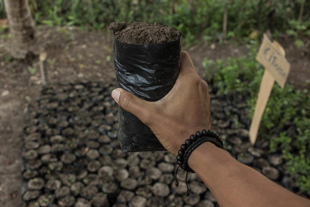 Haiti Tree Project..