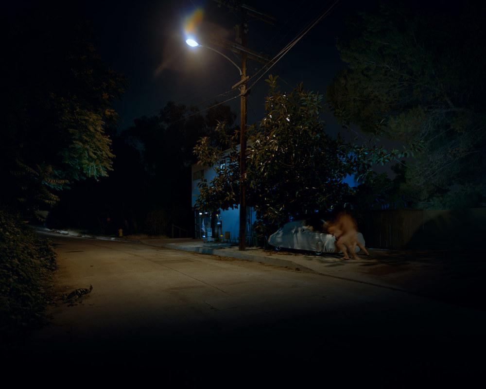 Nocturnal#5.jpg