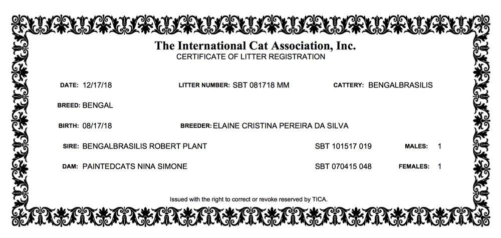 Nina - Litter Registration (17.08.2018).jpeg