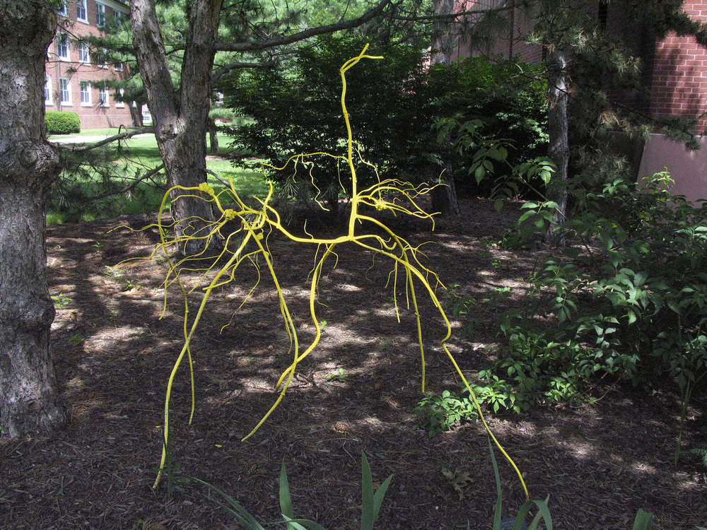 Yellow Weed - alternate view, 2009