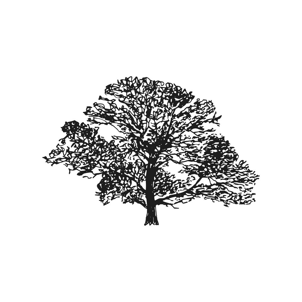 Down to Earth tree surgeons in Kent, logo design and brand identity by Ditto Creative, boutique branding agency Kent