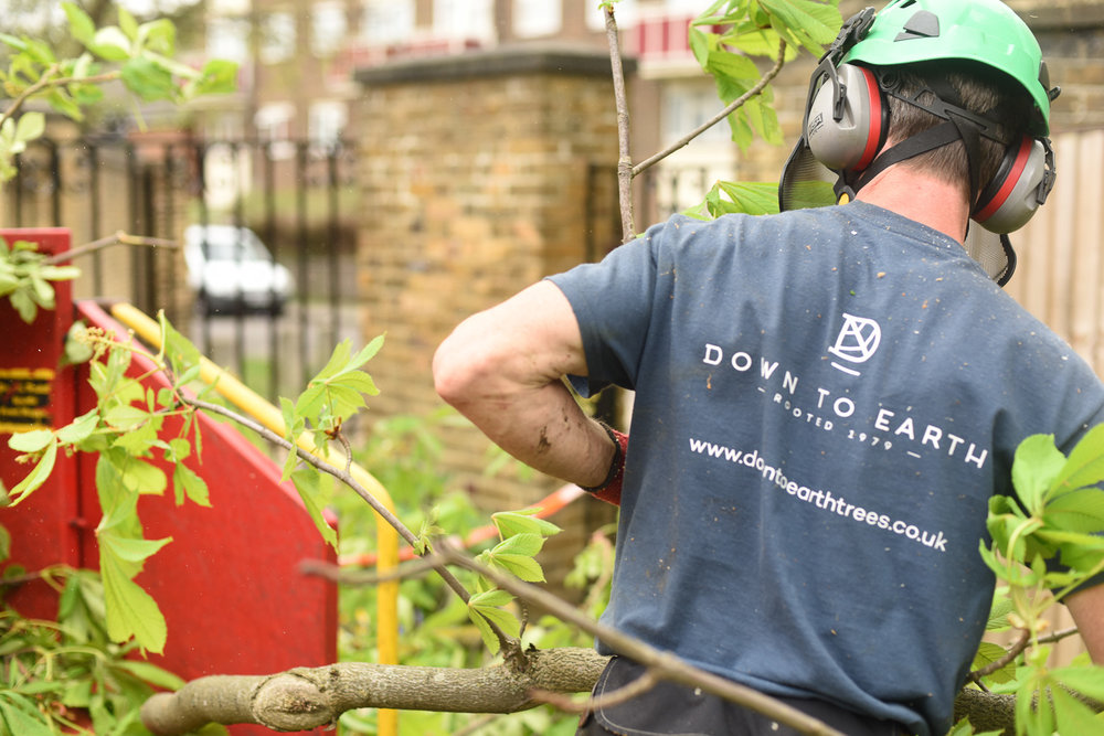 Down to Earth, Sevenoaks tree surgeons, brand identity and logo design by Ditto Creative, boutique branding agency in Kent