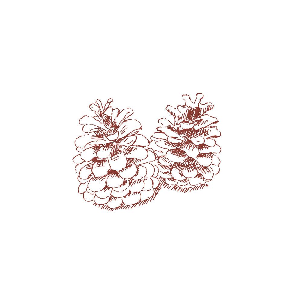 pine cones_Damson.jpg