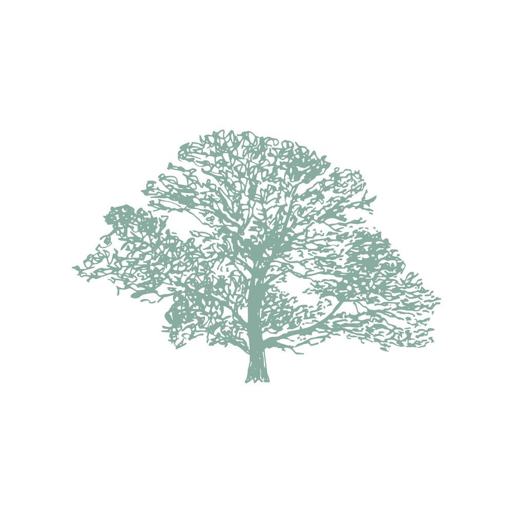 Down To Earth illustration 4_Eucalyptus.jpg