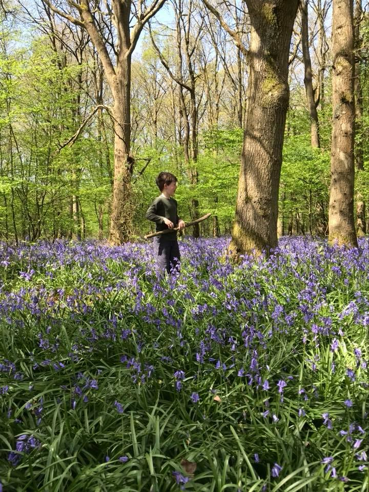 Bluebells at North Frith Farm, photo by Hannah Belton, Ditto Creative