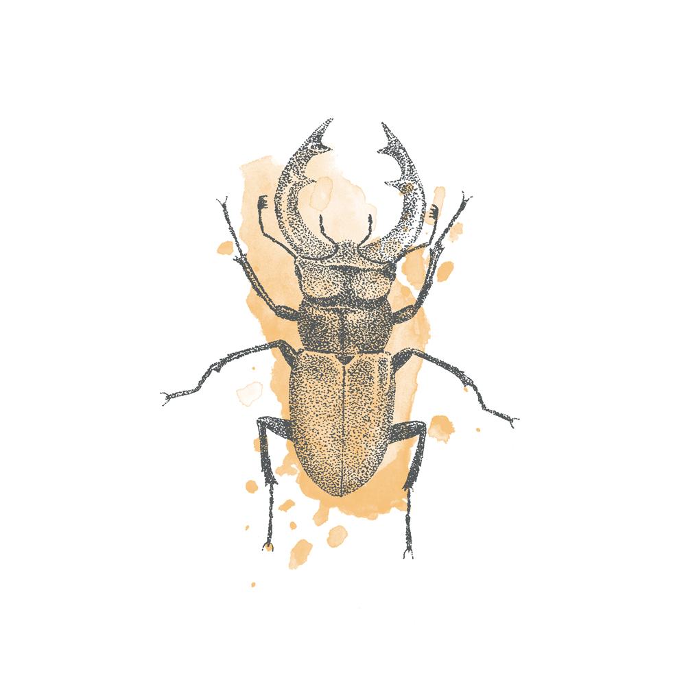 Stag-beetle-illustration.jpg