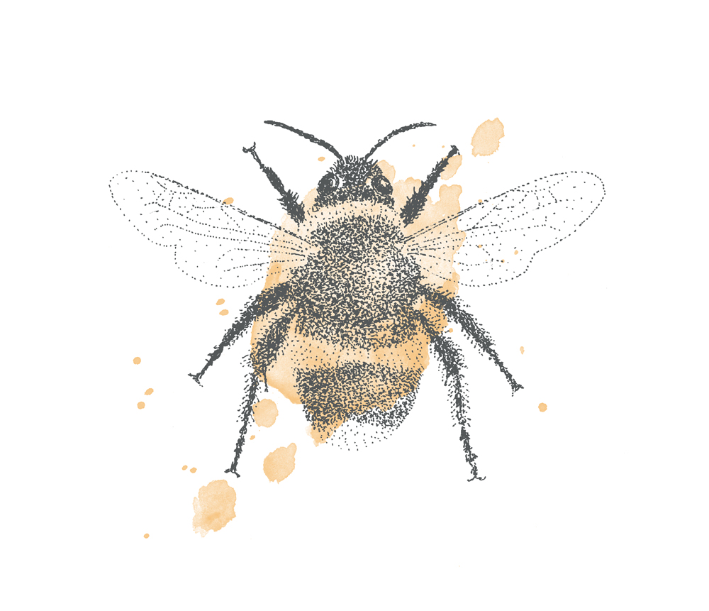 Bumble-bee-illustration.jpg