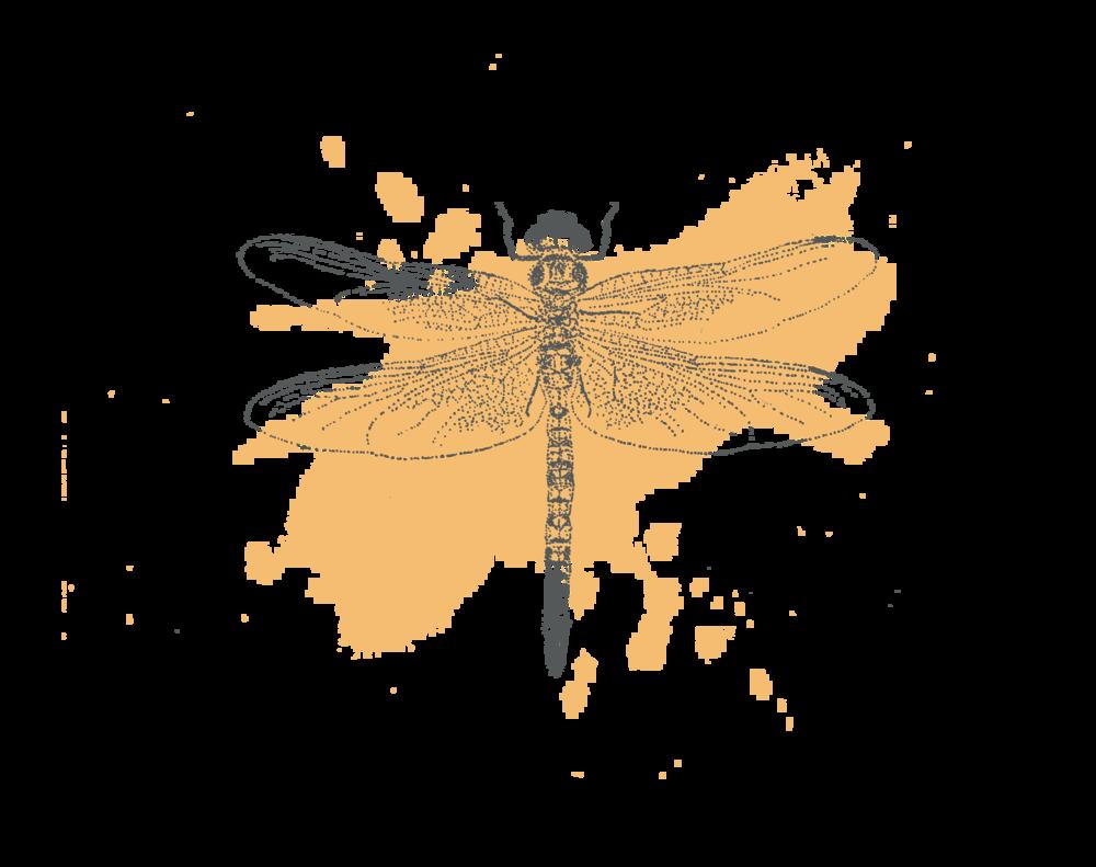 Dragonfly illustration.png