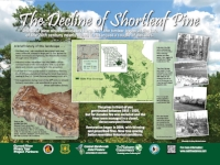 Stop 2: The decline of shortleaf pine (click HERE to view the full sign)