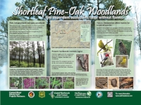 Stop 3: The fire ecology of shortleaf pine-oak woodlands (click HERE to view the full sign)