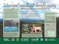 Stop 4. Societal benefits of managed shortleaf pine-oak woodlands (click HERE to view the full sign)