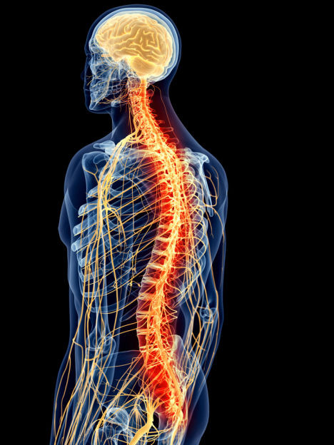 The brain, spine, and nervous system are intricately linked with the entire body.