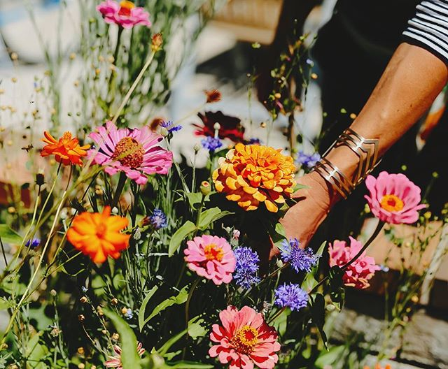Plants have the power to heal us on the inside & outside which is why LUA focuses on plant-based ingredients to achieve healthy, glowing skin. If it makes you feel & look younger, that's just an added bonus✨ Dreaming of what to put in our garden in a few months, any suggestions? {these zinnias from last season's garden are already at the top of my list!} 📷: @agnesartandphoto