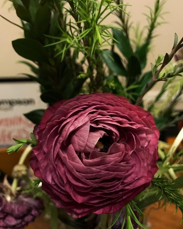 Haven't been weaving or taking a lot of photos lately. But I did buy a bouquet of ranunculus' a few weeks back. My fave flower 💗💗💗 #ranunculus #flowerlove