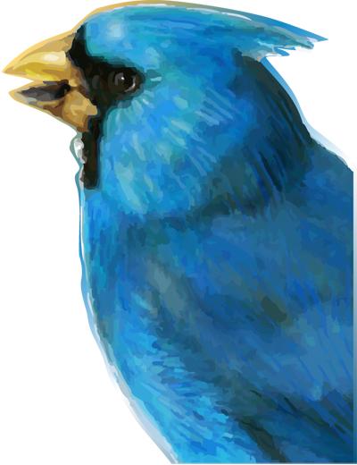 cardinal-blue.jpg