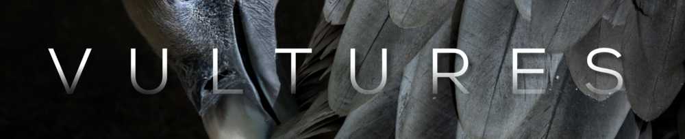 Vultures Graphic (Widescreen).PNG